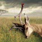 Antlers-thumb-400x282-121506